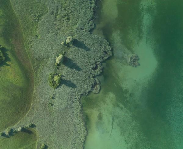 Bodensee Makrophyten